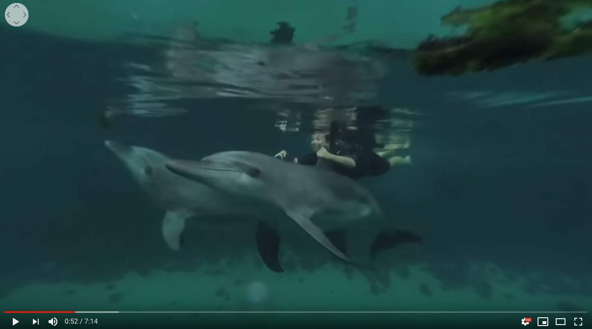 Dolphins swimming in 360 Video!
